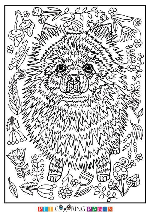17 Best ideas about Pomeranian