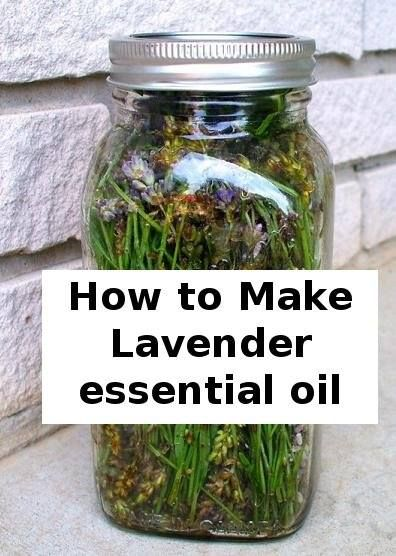 How to make mavender essential oil.