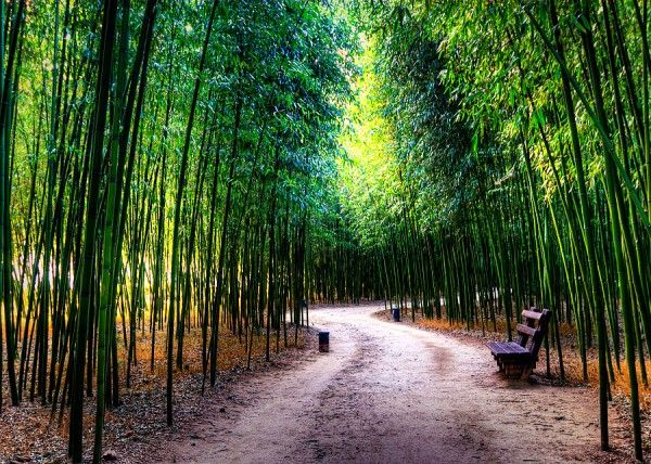 I like the way we're led down the path and deep into this bamboo forest in Ulsan, South Korea.