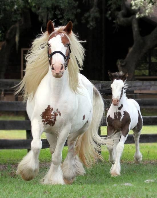 Horse and Foal http://sulia.com/my_thoughts/dbfaea6f-3c48-4803-b9fc-5d727dc46167/?pinner=125521983&