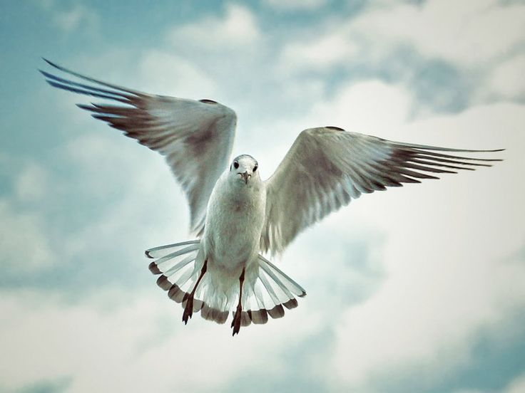 Martı #bird #gull #seagull