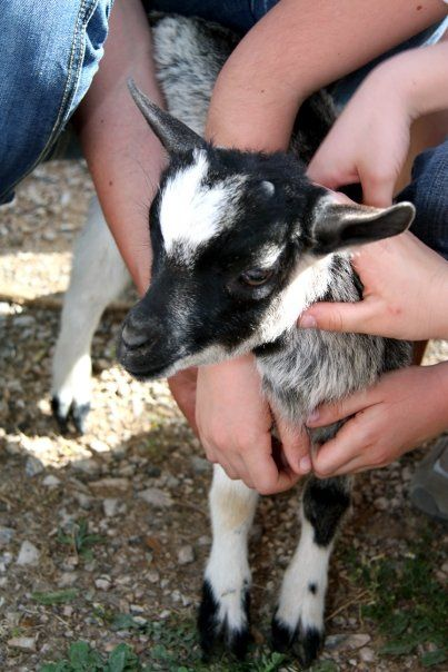 #Educationaltourism #DidacticFarm  Children with our goat