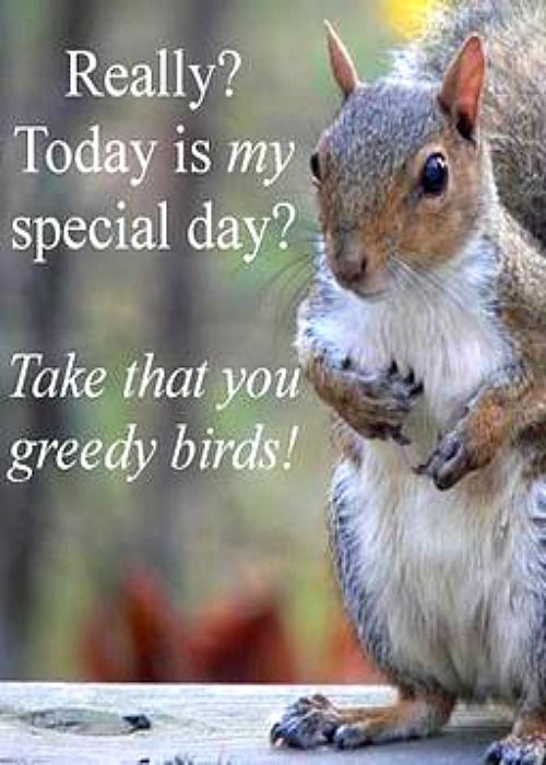 Wed., Jan. 21st is Squirrel Appreciation Day ... mark your calendar!