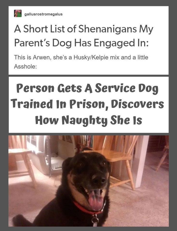 Person Gets A Service Dog Trained In Prison Discovers How
