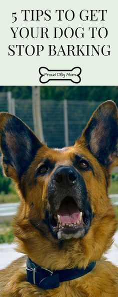 Does Your Dog Bark At EVERYTHING and Won't Stop? Check Out These 5 Tips To Get Your Dog To Stop Barking | Dog Training Tips |