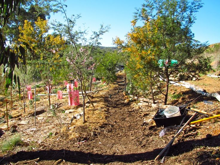 A Way Through the Woods: Designing the Paths in our Forest Garden - Milkwood: permaculture courses, skills + stories