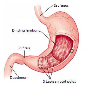 SHAMPOO MADU KUTU RAMBUT: Jam Piket Organ Tubuh Manusia