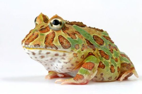 15 Different Type of Frogs You Should Know About