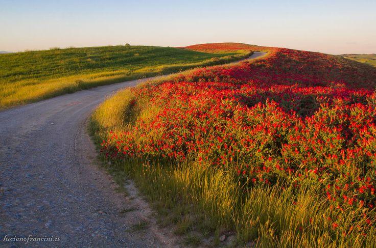 Crete-fiori-di-sulla.jpg