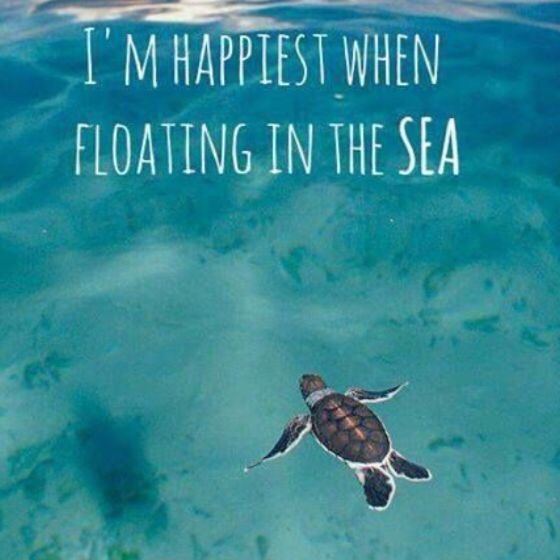 Sea Travel Quotes: I'm Happiest When Floating In The Sea