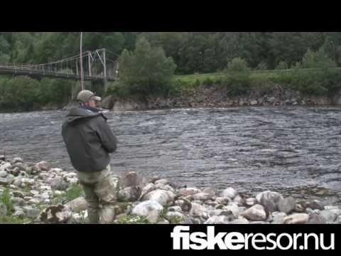 Atlantic salmon - Fly fishing in Gaula - Bridgepool - (More info on: https://1-W-W.COM/fishing/atlantic-salmon-fly-fishing-in-gaula-bridgepool/)