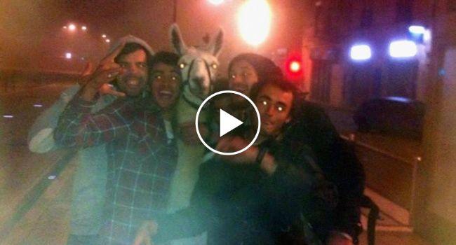 Jovens Bêbados Sequestram LAMA e Vão Passear De Elétrico