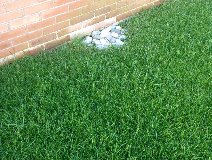 17 best images about sementi per prato seeds for lawn for Festuca prato