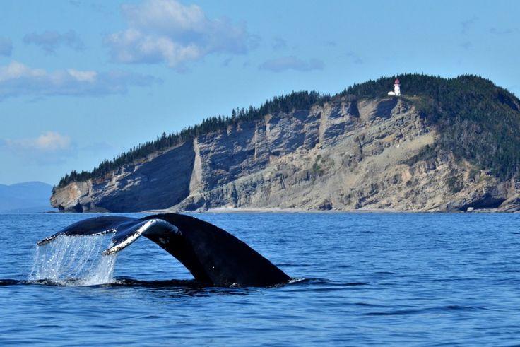 Croisière aux baleines, Parc national Forillon. Photo : Marc Loiselle, Le Québec maritime