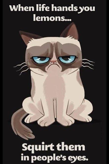 Grumpy cat is grumpy - www.meme-lol.com