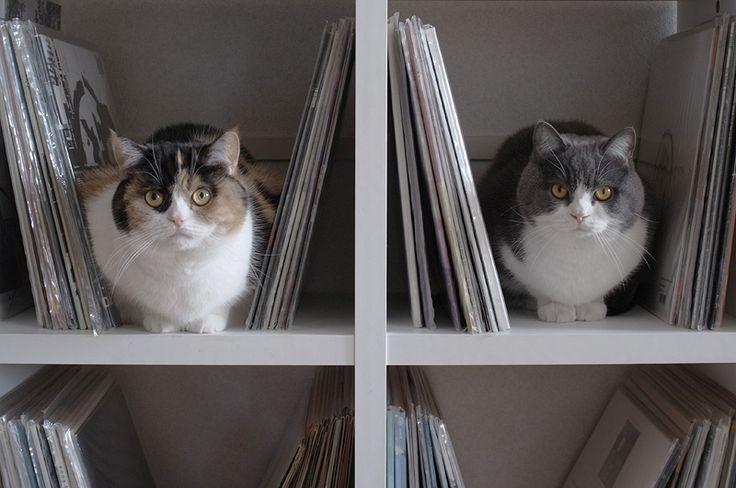 these kitties!  cuteness overload.