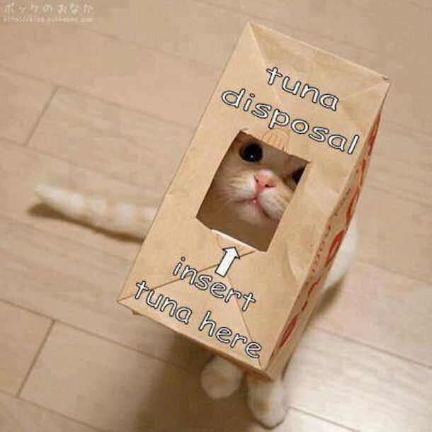 Tuna Disposal cute animals cat cats adorable animal kittens pets kitten funny pictures funny animals funny cats