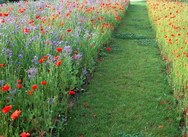 Les prairies-fleuries, un bon moyen de remettre nos jardins au service de la nature : abeilles, papillons...
