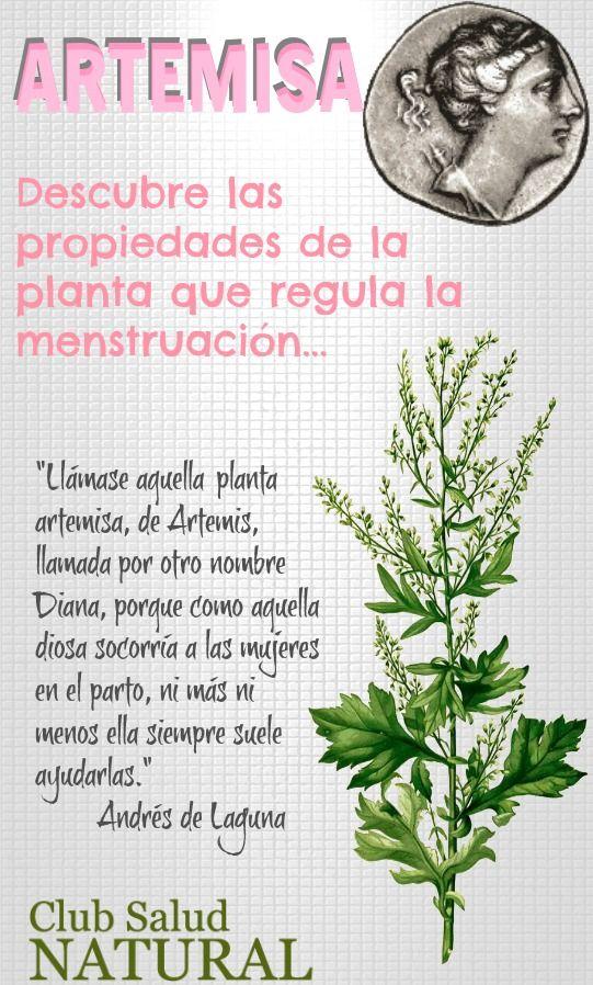 Artemisa La Planta que Regula la Regla