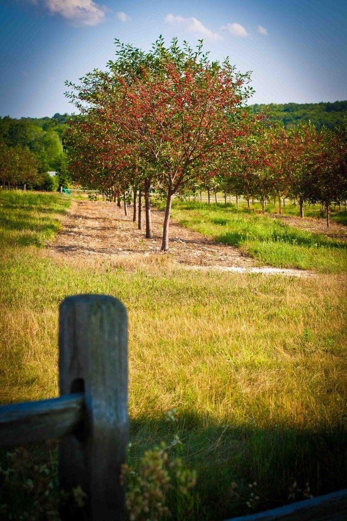 184 best Door County Wisconsin images on Pinterest Door county