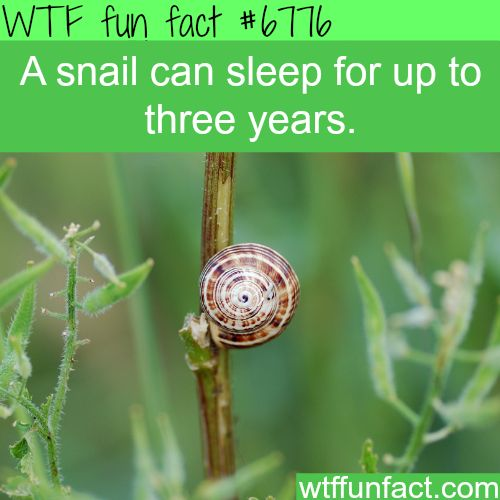 Snails can sleep up to three years - WTF fun fact