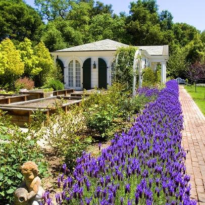 76 best Lavender Landscapes images on Pinterest   Gardening ...