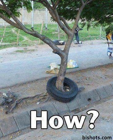 So the question is how? #funny