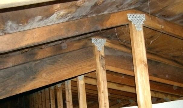 Video Household Mold Goes On The Attack In Newark Community Steps Up To Help Attic Mold Removal Chicago Attic Mold Newark Air Purification Systems Molding