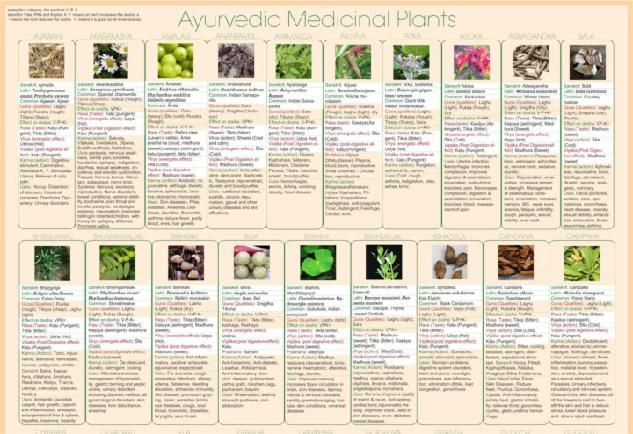 With Information for each herb including Rasa, Virya, Vipaka, guna, energetic properties, action, uses, and effect on each dosha.