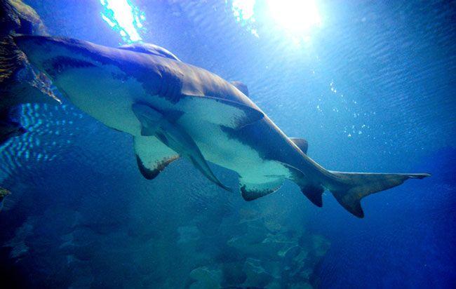 Bayworld Oceanarium - Humewood AnimalParks
