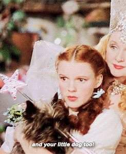 "THE WIZARD OF OZ ~ ""...and your little dog, too!"" [Video/GIF]"