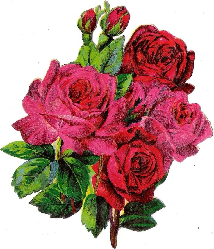 Oblaten Glanzbild scrap die cut chromo Rose  14cm  Blume flower