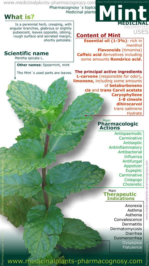 Mint benefits. Infographic. Summary of the general characteristics of the Mint plant. Medicinal properties and uses more common.  http://www.medicinalplants-pharmacognosy.com/herbs-medicinal-plants/mint-spearmint/benefits-infography/