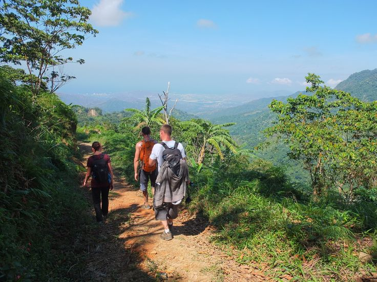 On our hiking tours you will hike through the beautiful forests of Colombia.