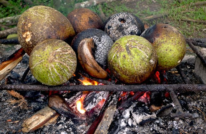 You might see this in a Bajan village or on the beach.   We've taken breadfruit - what was once a staple for African slaves from a tree said to be brought by Captain Bligh - and turned it into a versatile food. It can be roasted like pic (and even stuffed), made into fried chips, flour or my fav, pickled.