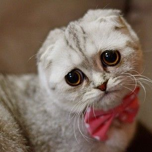 217 best images about Unusual Looking Cats on Pinterest ...  217 best images...
