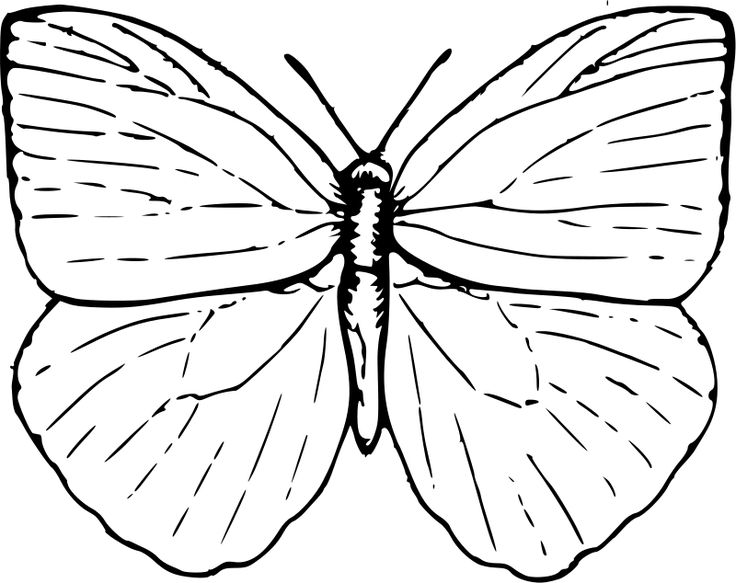 Epic Butterfly Coloring Pages For Kids 92 Butterfly Coloring Pages for