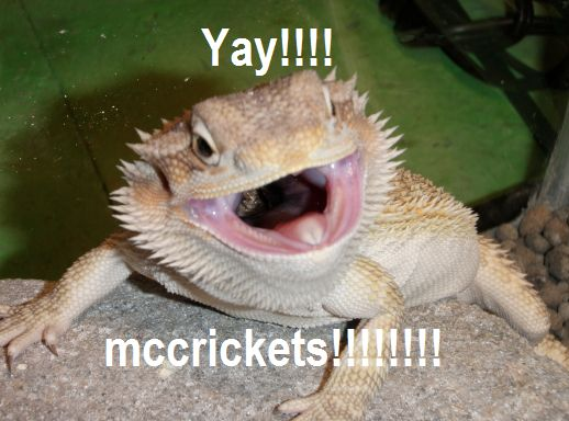 Bearded Dragon . org • View topic - bearded dragon memes ...