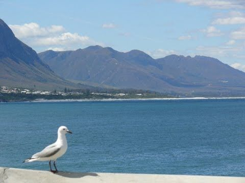 "Hermanus, in the heart of the Cape Whale Coast... Welcome to Hermanus, about an hour from Cape Town Airport in the heart of the Whale Coast.  Hermanus is also known for the ""Whale Capital of the world"""