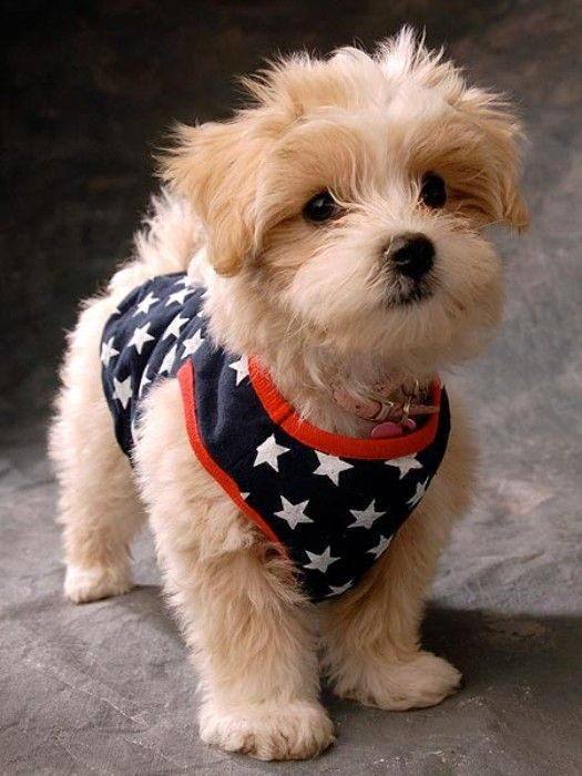 The few, the proud, the furry: A collection of patriotic pets for your Fourth of July