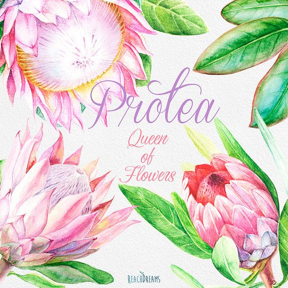 Protea Queen of Flowers Wedding Watercolor Flowers and