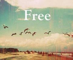 Freedom = Happiness