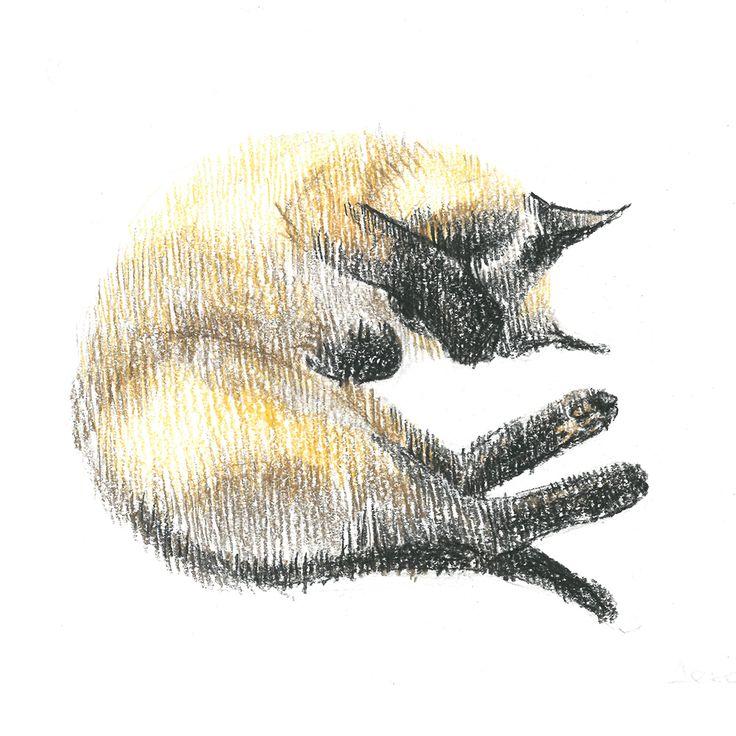 Siamese cat, thai, sleep, сolour pencils, graphic, illustration, draw, сиамская кошка, тайская кошка, кошка спит клубочком, графика, иллюстрация, цветные карандаши.