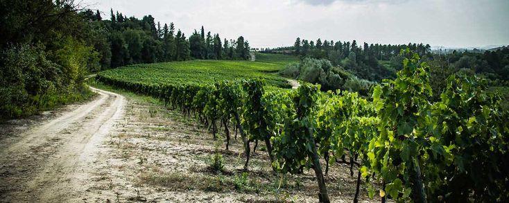 Fattoria San Quintino Wine Tasting