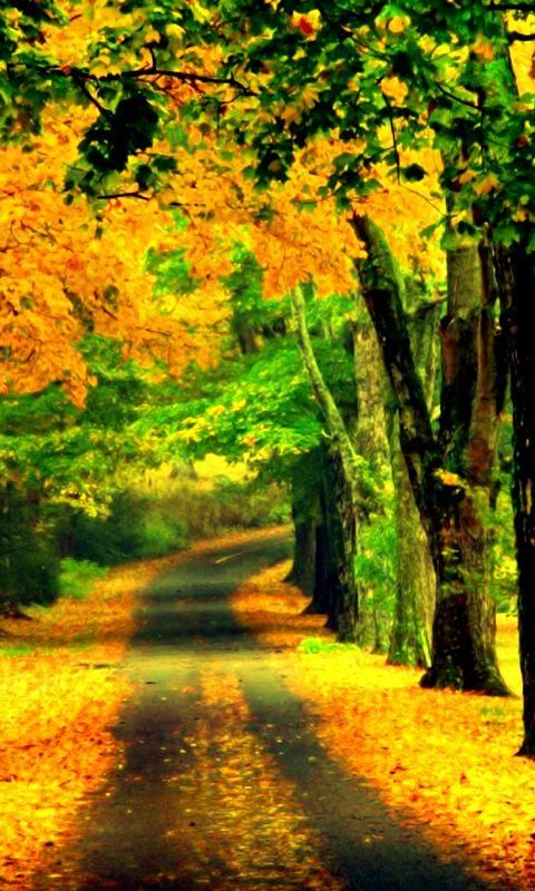 Télécharger Beautiful Road 480 X 800 Wallpapers - nature spring autumn road wallpaper beautiful colors | mobile9