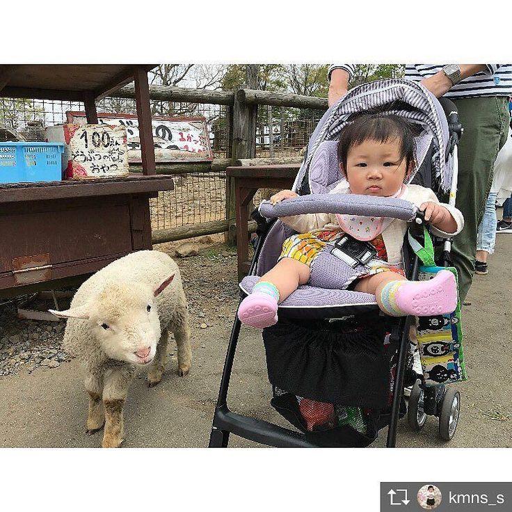 羊の赤ちゃんとのショットに癒されます ベビーカーのお出かけで靴を失くさないから便利とママからお声をいただきます 可愛いだけじゃないのも魅力です  Repost from @kmns_s さんより@TopRankRepost #TopRankRepost  ヒツジの赤ちゃんと #阿蘇ミルク牧場 隣に座ってた女の子とママさんが娘を見てかわいいーって言っててテンションがあがったママたちでした()嬉  #前髪ぱっつん #7月生まれ #生後9ヶ月 #女の子baby #babygirl #親バカ部#コドモノ #ママリ #ベビフル #mamanokoカメラ部 #mamanokoギフトキャンペーン #ベビリトル #コノビー #コズレ #mamapo_official #kids_japan #コドモダカラ #スマイル育児 #smarby #ママchan #ウェルノート #ちょよにお絵かき #junjunラクガキ #のちこここ #comona #アティパスフォト  #靴 #失くさないでね