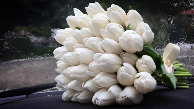 Tulips Fleurs Trikala