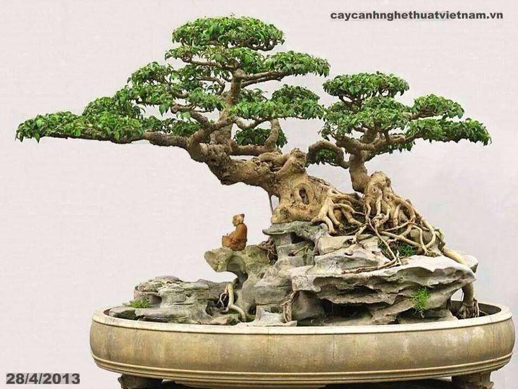#Bonsai #Art #BonzaiArt #Gardening