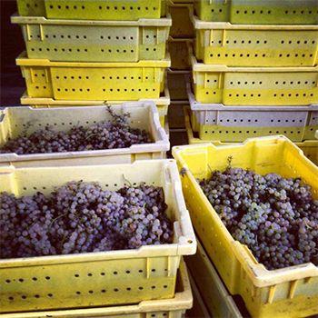 Top Wine Picks! Small Lot Wines - Jake Skakun picks his favourite Canadian small lot wines.