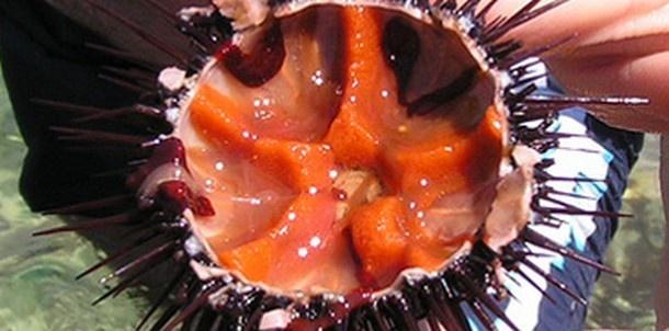 Frutti di mare - ricci